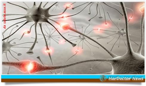 Neurone.sinapsi