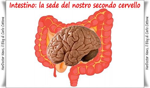 Intestino.sede del nostro secondo cervello
