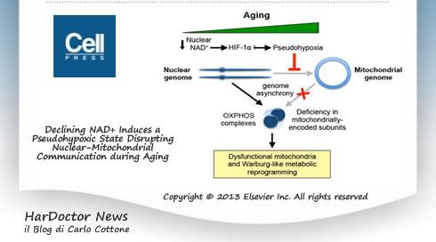 Muscoli ed invecchiamento