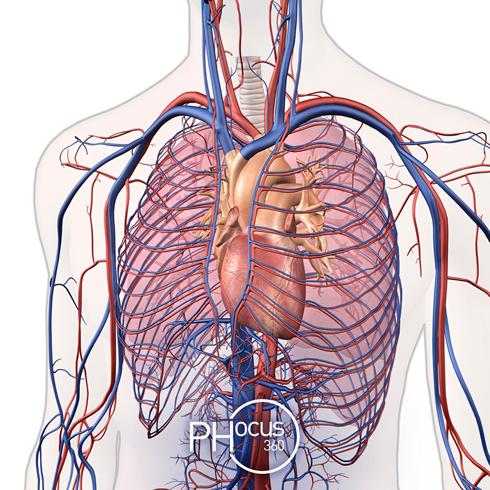 Ipertensione arteriosa polmonare: nuovo impegno di Janssen nelle malattie rare